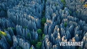 Khám phá rừng đá kỳ bí triệu năm tuổi ở Madagascar