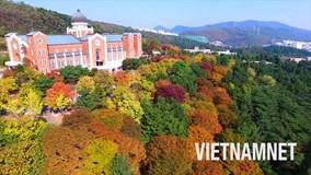 Cảnh đẹp ngất ngây ở nơi là bối cảnh của hàng trăm phim Hàn nổi tiếng