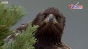 Xem một buổi tập bay vô cùng khắc nghiệt của đại bàng con