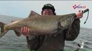 Cần thủ Mỹ câu được cá hồi vua to như quái vật