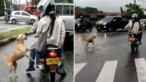 Chú chó tuyệt vọng đuổi theo chủ giữa con đường trơn trượt sau mưa