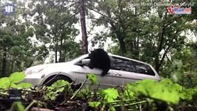 Gấu hoang từ trong ô tô phá toang cửa kính, chủ xe chạy bán sống bán chết