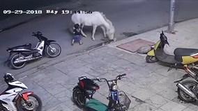 Mẹ sơ ý để con trai 3 tuôi bị ngựa đá văng xa
