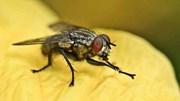 Vì sao ruồi luôn cọ sạch chân trước khi ăn?