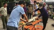 Nghệ An: Cận cảnh chích điện, mổ thịt cá sấu ở bến xe