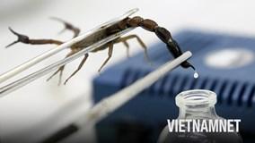 Tại sao nọc độc bọ cạp nguy hiểm lại có giá tới 39 triệu đô?