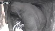 Giải cứu voi con ngã xuống giếng sâu gần 8 mét