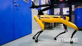 Chó Robot giám sát công trình xây dựng chặt chẽ đến từng chi tiết