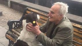 Khoảnh khắc ông lão gặp chó cưng thất lạc sau hơn 3 năm tìm kiếm