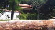 Cổng biệt phủ trăm tỷ xây trái phép của đại gia vàng la liệt gỗ quý