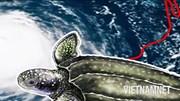 Sinh vật biển 'ứng phó' thế nào với siêu bão?