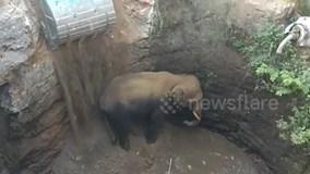 6 tiếng dùng máy xúc đào đường giải cứu voi khỏi giếng sâu