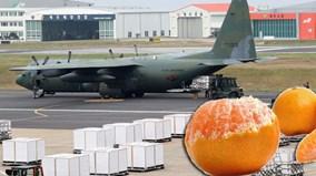 Hàn Quốc dùng máy bay quân sự chở quýt tặng Triều Tiên