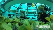 Công nghệ trồng rau dưới đáy biển làm salad