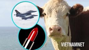 Bò đóng vai trò gì trong những siêu máy bay phản lực của Mỹ?