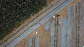 Nông dân bỏ đồng chạy 'thoát thân' khi thấy flycam bay trên đầu