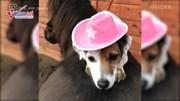 Những chú chó khiến dân mạng 'phát cuồng' vì quá sức thông minh