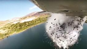 Hé lộ điều kỳ lạ từ những 'cơn mưa cá' ở khắp nước Mỹ