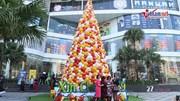 2.000 chiếc nón lá tạo thành cây thông Noel cao hàng chục mét ở Hà Nội