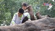 'Nghĩa địa gỗ' bị bỏ quên ở Hà Nội trở thành điểm vui chơi của trẻ em