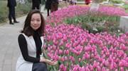 Cánh đồng hoa tulip 180 ngàn bông khoe sắc giữa Thủ đô