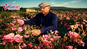 Đến Pháp thăm Grasse - Thủ phủ nước hoa của Thế giới