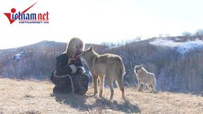 Cô gái gây sốt với hình ảnh dùng miệng bón cho chó sói ăn