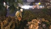 Công nhân ngày đêm đánh chuyển cây, gấp rút mở rộng đường Láng