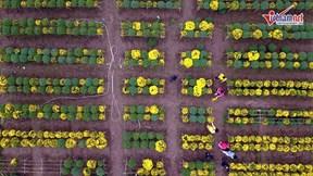 Vườn cúc mâm xôi nổi tiếng Đồng bằng sông Cửu Long bất ngờ 'bay' ra Hà Nội
