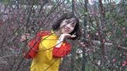 Đào Nhật Tân khoe sắc sớm, du khách chen chân chờ chụp ảnh cùng hoa
