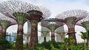 Tìm hiểu quy trình 'nói hộ cho cây' ở Singapore
