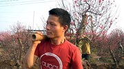 Thanh niên tứ xứ về Nhật Tân đánh gốc đào dịp Tết, kiếm tiền triệu mỗi ngày