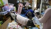 Cuộc sống sang chảnh của những chú lợn được nuôi làm thú cưng