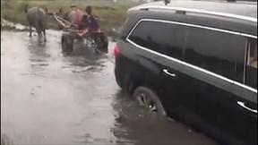 Xem xe trâu giải cứu ô tô hạng sang thoát khỏi đường lầy