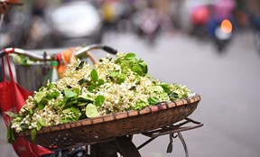 Hoa bưởi tinh khôi xuống phố, 'giá chát' vẫn nườm nượp người mua