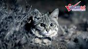 Cận cảnh bản năng sát thủ của loài mèo nhỏ con nhất châu Phi