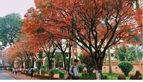Khám phá con đường lá vàng đẹp như Hàn Quốc trong lòng Hà Nội