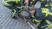 Điều cả biệt đội cứu hộ để giải cứu một...con chuột béo mắc kẹt