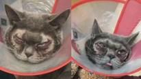 Chi hơn 34 triệu để cắt mí làm đẹp cho mèo