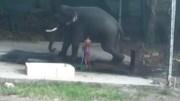 Đánh voi bằng gậy, người chăm sóc bị voi giẫm đến chết