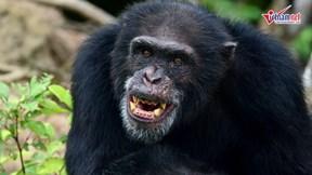 Bí ẩn rừng sâu: Sức mạnh kẻ cầm đầu trong thế giới tinh tinh