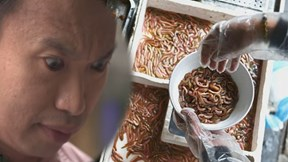 Món chả 'giun' đặc biệt của Việt Nam qua con mắt của du khách nước ngoài