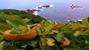 Đảo đáng sợ bậc nhất thế giới, nơi cư ngụ của 4000 con rắn kịch độc