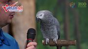 Đâu là yếu tố quyết định khiến vẹt có thể nói như người?