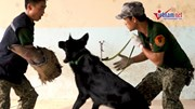 Cần làm gì để giải cứu người đang bị chó dữ tấn công?