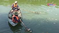 Cá chết trắng nhiều ngày, sông Phú Lộc bốc mùi hôi thối
