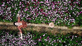 Cánh đồng bậc thang hoa cánh bướm Hà Lan có '1-0-2' tại Sa Pa