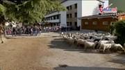 Thiếu chỉ tiêu, trường tiểu học Pháp tuyển thêm 15 học sinh cừu