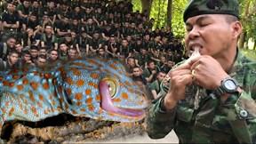 Xem binh sĩ học cách lột da, ăn sống tắc kè để sinh tồn trong rừng rậm