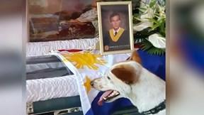 Cảm động chú chó chờ đợi và khóc trước linh cữu người chủ đã qua đời